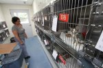New York Animal Shelter Laws