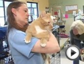 Loving Cats Available at Save-A-Pet.mp4